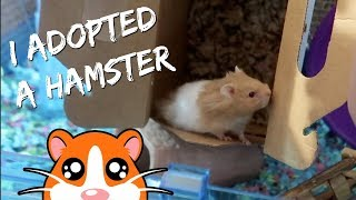 ADOPTING A SPECIAL NEEDS HAMSTER FROM PETSMART