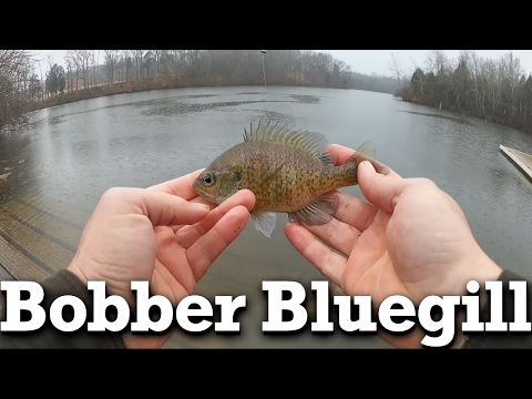 Float Fishing with Worms – Slip Bobber Bluegills