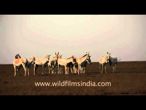 Kutch video