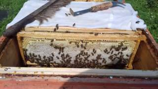 Медосбор-2016 / Один день из жизни пчеловода