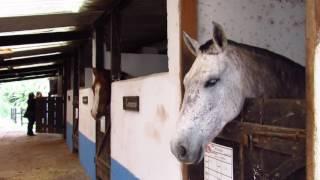 Escola de Equitação e Haras São Francisco- Peruíbe