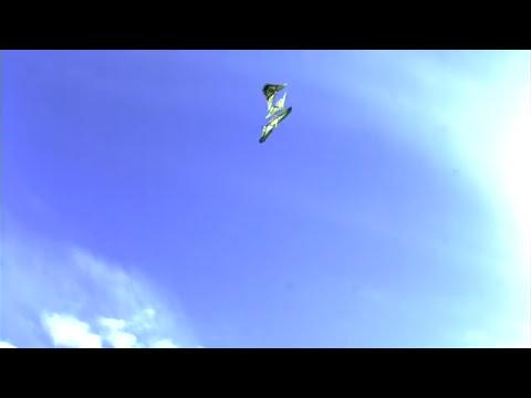 ナミアゲハの求愛飛翔 高速度映像