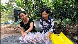 Quậy xong 2 ổ Kẹo Dừa Bến Tre để làm quà - Hương vị đồng quê - Bến Tre - Miền Tây