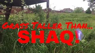 6 foot Tall Grass! ► Property Bid, Super Overgrown Property Walk Through