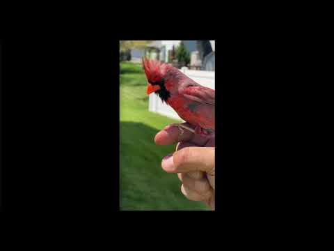 أمريكي يتواصل مع طائر بري بتقليد صوته... فيديو
