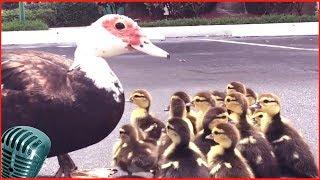 смешные животные и природа 7# наш bbs