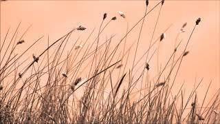 6. Part 流行音乐钢琴曲 14首 轻音乐 纯音乐 Light Music