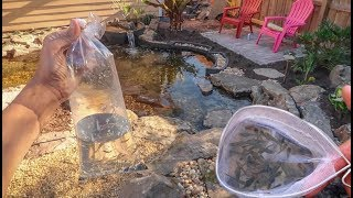 FISH for my NEW POND!!