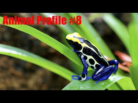 Poison Dart Frog - Animal Profile