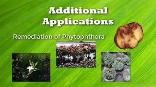 Agricultural Bioreactors