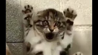 Funny and Cute Animals - Animal World 1