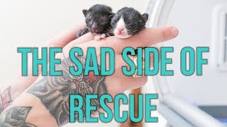 Kittens Abandoned Under Oil Painting