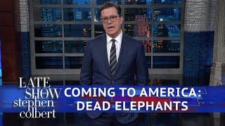Trump Reverses Obama's 'Elephant Trophy' Policy