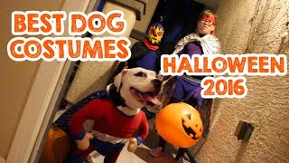 Best Dog Costumes For Halloween #HalloweenBetterTogether #PetcoHalloween #HalloweenTogetherContest