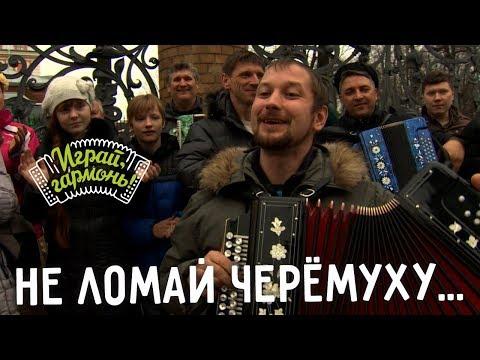 Играй, гармонь! | Антон Грибанов (г. Томск) | Не ломай черёмуху.