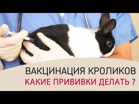 Программа по лечению гепатита с в москве 2016