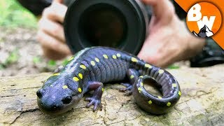 How to Shoot a Salamander!