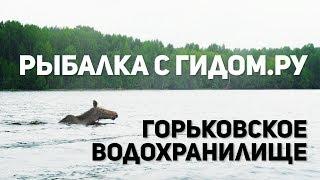 Фидер на горьковском водохранилище новое 2020