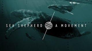 SEA SHEPHERD A MOVEMENT