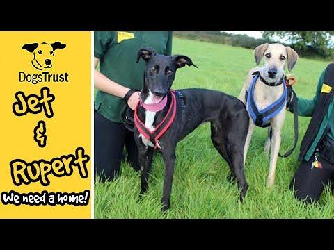 Meet Jet & Rupert! | Dogs Trust Leeds