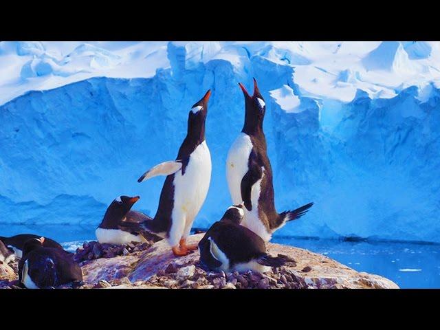 人生成就的里程碑‧南極講座5分鐘精華