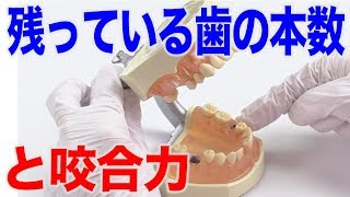 残っている歯の本数が咬合力の目安に!