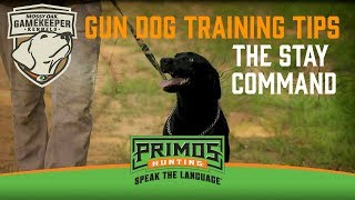 Gun Dog Training Tips: The Stay Command