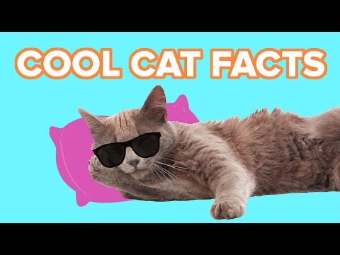 Crazy Cool Cat Facts