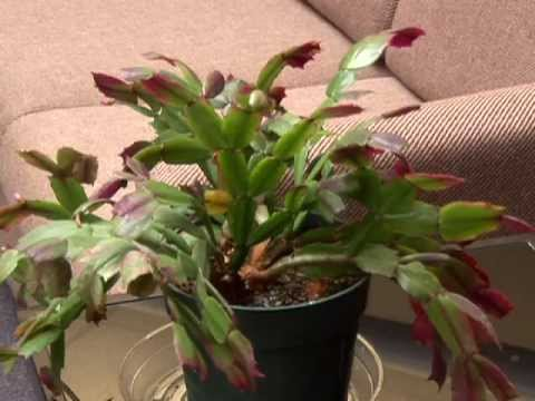 Kansas Healthy Yards How To Water Succulents And Cacti