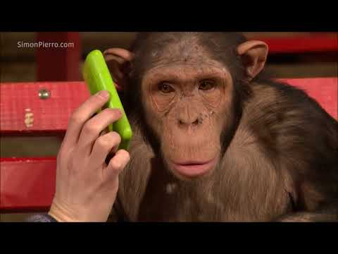 Hilarious! Monkeys React to Magic Tricks