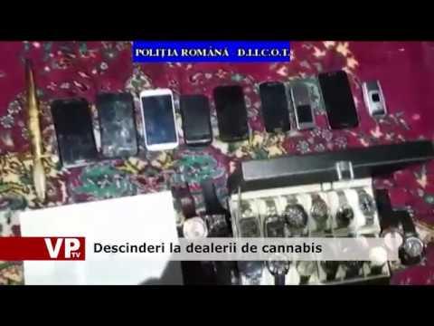 Descinderi la dealerii de cannabis