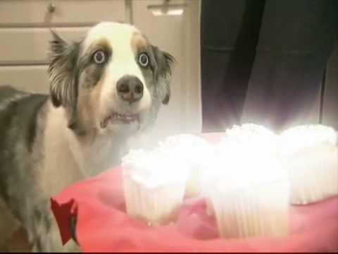 Dramatyczny pies i ciasteczka