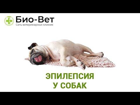 Эпилепсия у Собак - Причины, Симптомы и Лечение // Сеть Ветклиник БИО-ВЕТ