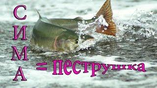 Все о рыбалке в приморском крае по реками