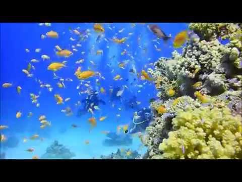 Scuba diving in Tiran Island