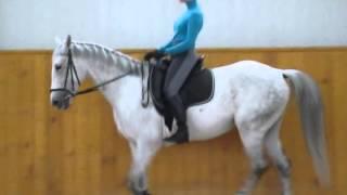 Смотреть онлайн Правильная посадка всадника на лошади