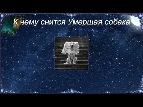 К чему снится Умершая собака (Сонник)