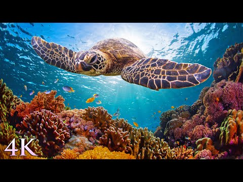 11HRS of 4K Turtle Paradise - Undersea Nature Relaxation Film + Meditation Music by Jason Stephenson