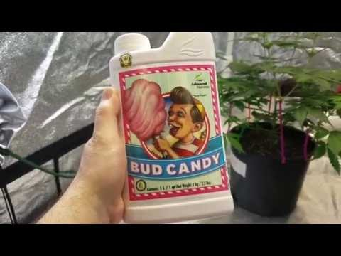 How I Mix My Advanced Nutrients Big Bud,Bud Candy, Flowering Nutrients complete Grow Series Part 20