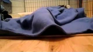 Кто это там крякает под одеялом