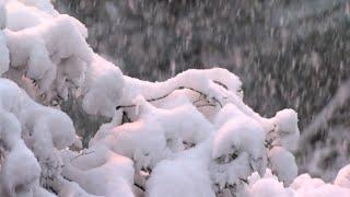 Winter Wonderland Settles In Over Jackson, Miss.