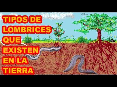 Elena malysheva sobre los parásitos en el organismo del vídeo