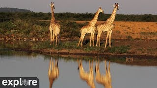 Webcam Live Africam Tau  Northern border of South Africa and Botswana