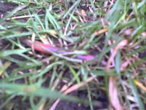 Die Würmer bei den Welpen und ihre Behandlung