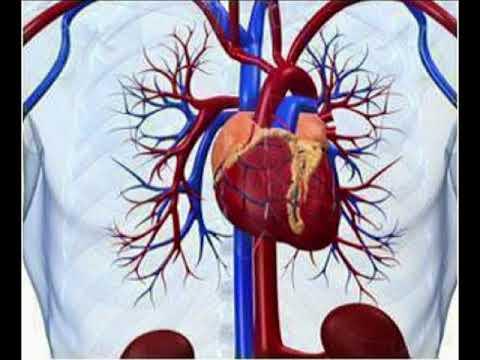 Si për të kuruar hipertensionit vrapim