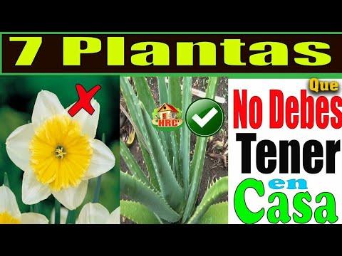 CUIDADO!!! Nunca tengas ninguna de Estas 7 Plantas dentro De Tu hogar, Muchos han Perdido la Vida