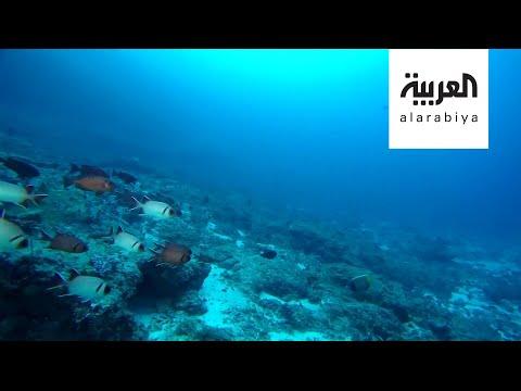 العرب اليوم - شاهد: دراسة بيئية مثيرة تتحدث عن انقراض الأسماك من البحار