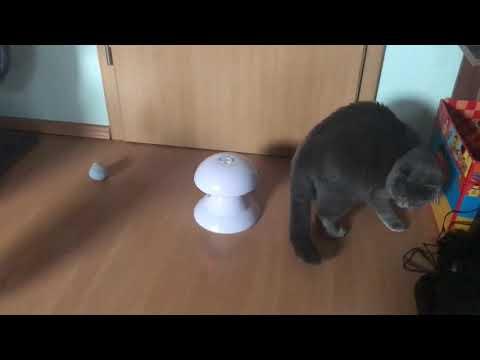 Elektronisches Drehendes Licht Spielzeug für Katzen I Laser Pointer I Rick und Morty