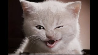 супер животные братья наши младшие коты