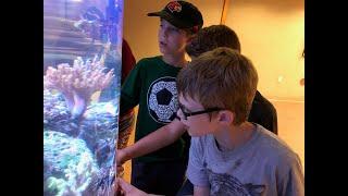 Diamond Studio: Water Quality in a Reef Aquarium